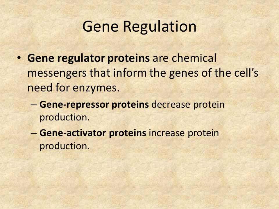 Gene Regulation Gene regulator proteins are chemical messengers that inform the genes of the cell's need for enzymes.