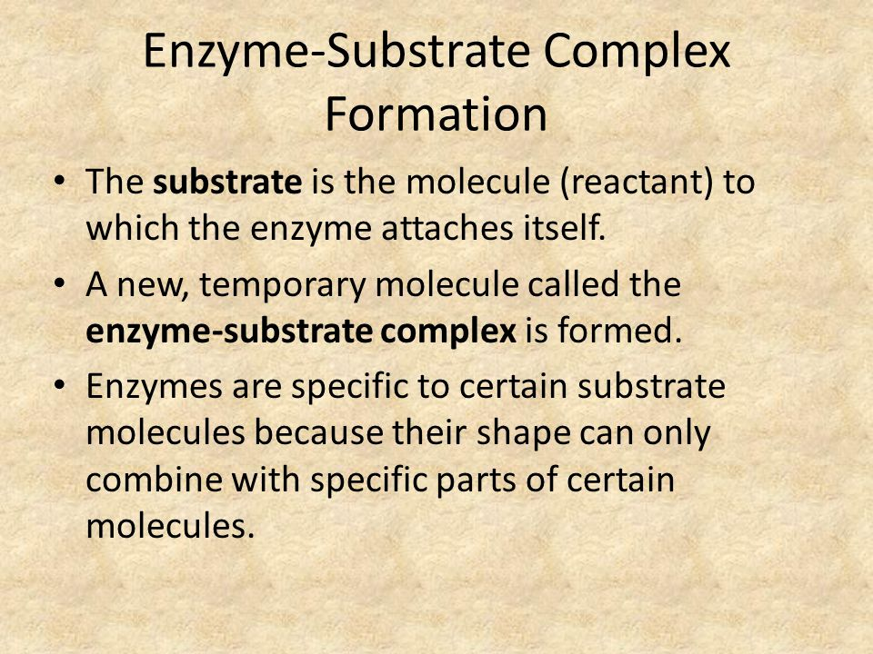 Enzyme-Substrate Complex Formation The substrate is the molecule (reactant) to which the enzyme attaches itself.