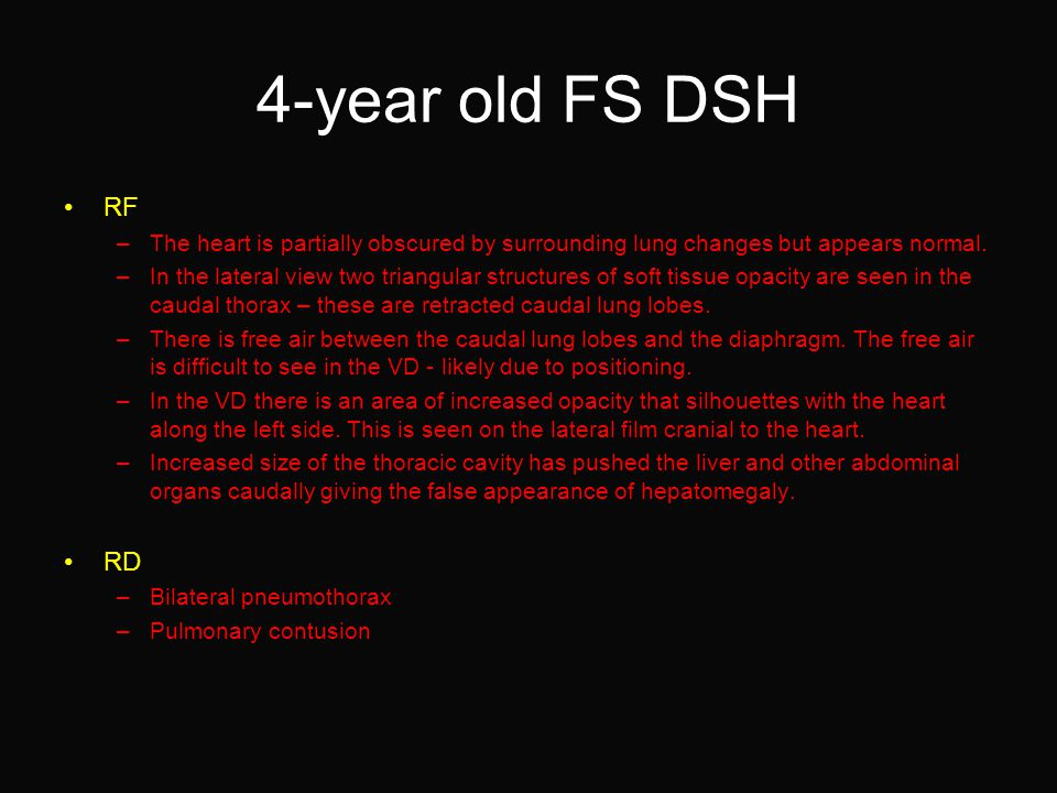 4-year old FS DSH RF –The heart is partially obscured by surrounding lung changes but appears normal.