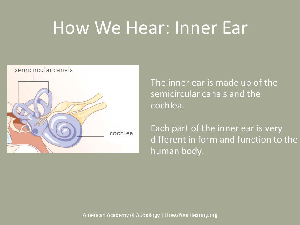 American Academy of Audiology | HowsYourHearing.org How We Hear: Inner Ear The inner ear is made up of the semicircular canals and the cochlea.
