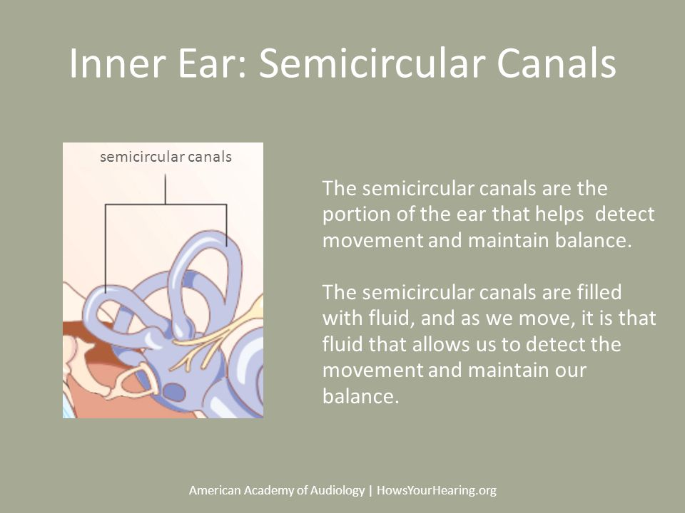American Academy of Audiology | HowsYourHearing.org Inner Ear: Semicircular Canals The semicircular canals are the portion of the ear that helps detect movement and maintain balance.