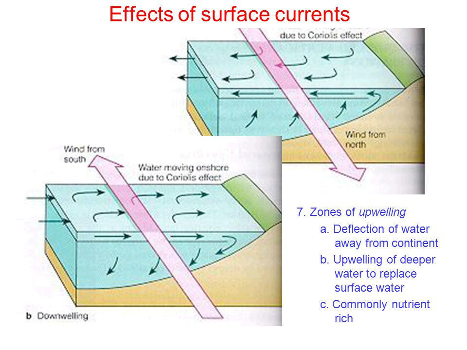 Effects of surface currents 7. Zones of upwelling a.