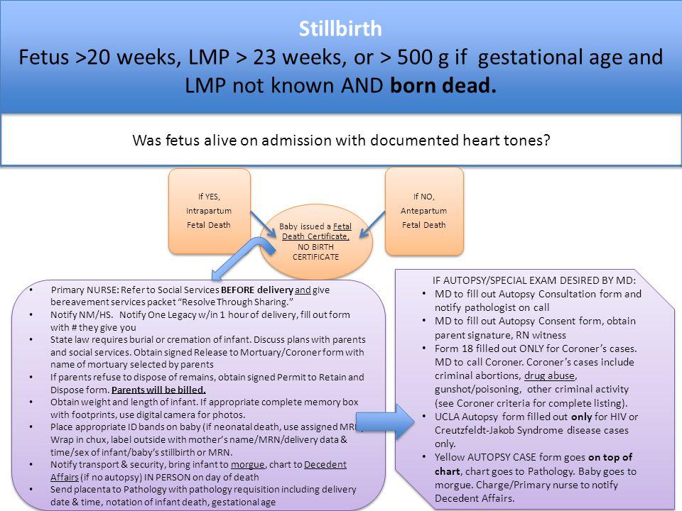 Fetal Demise/Neonatal Death Algorithm By, Briana Schafer. - ppt ...