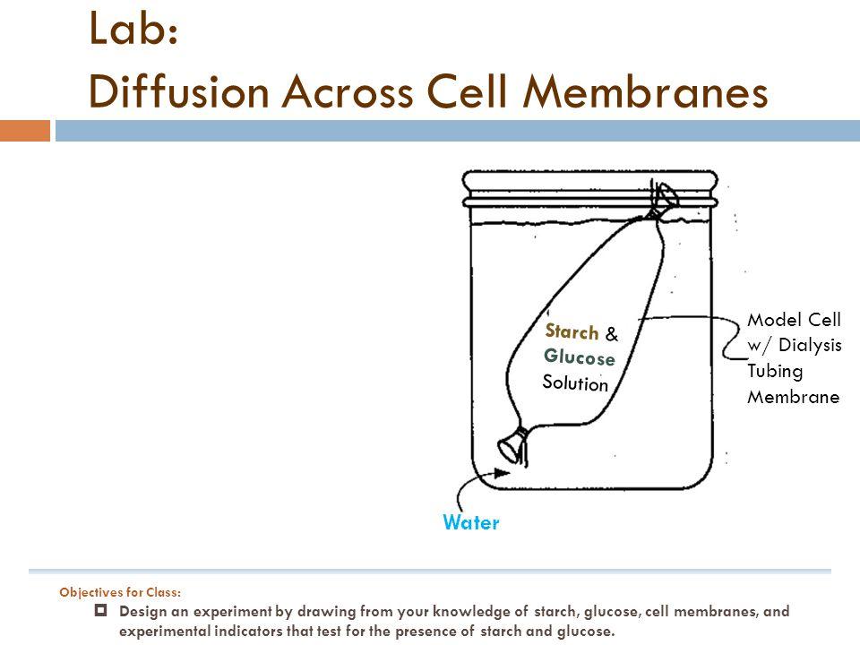 cell membrane and membrane lab diffusion