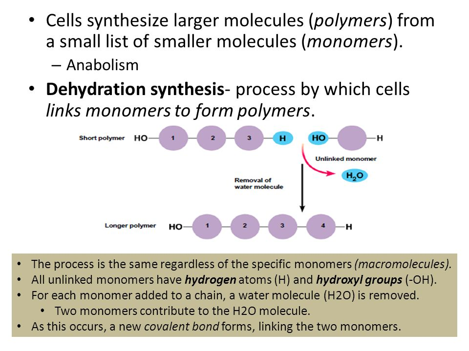 From Molecules to Organisms: Structure & Processes Organic ...