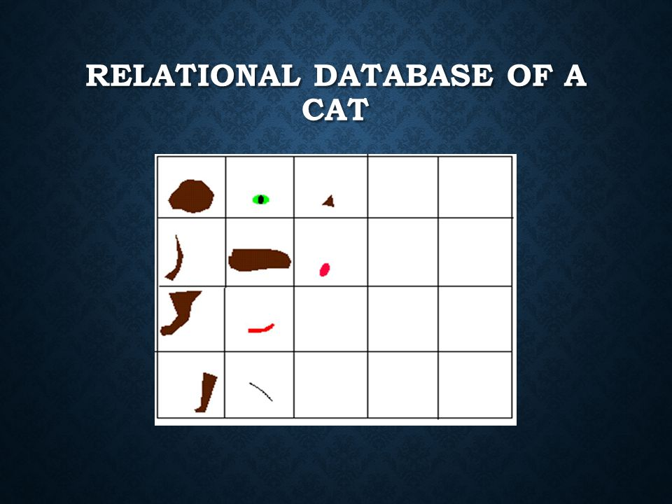 RELATIONAL DATABASE OF A CAT