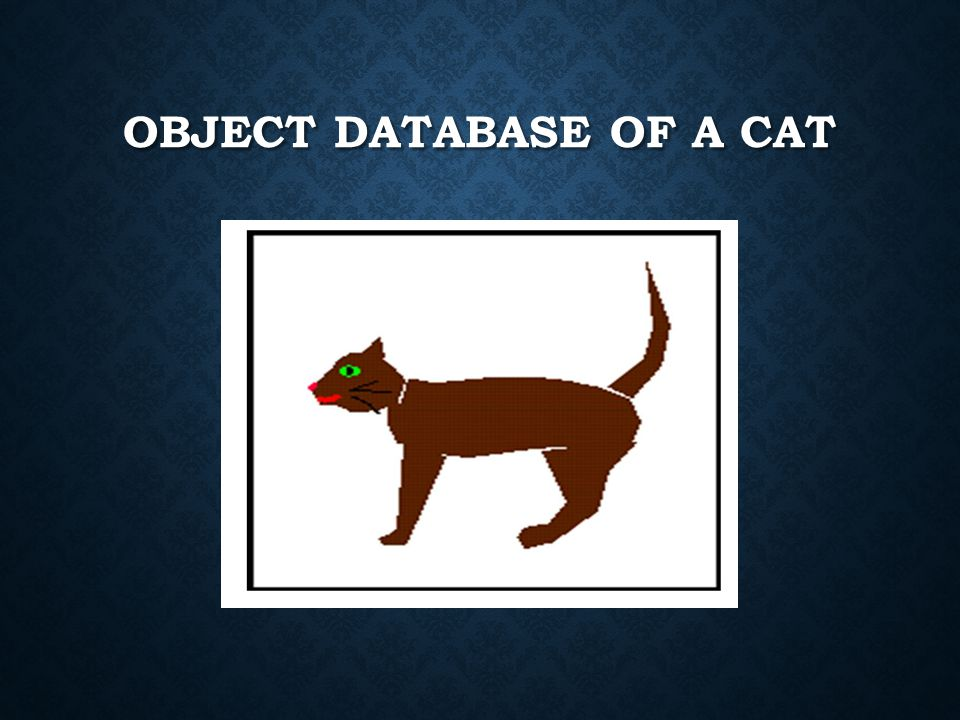 OBJECT DATABASE OF A CAT