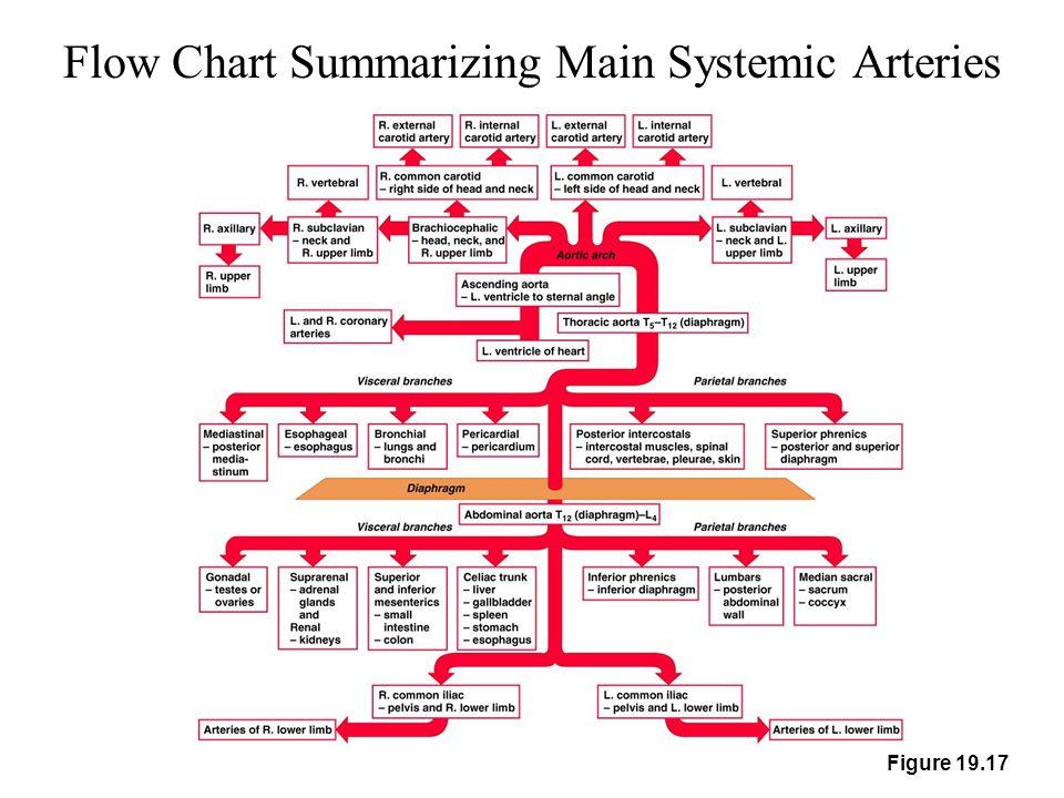 Flow Chart Summarizing Main Systemic Arteries Figure 19.17