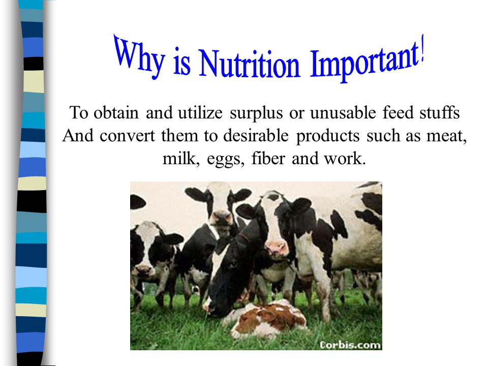 To obtain and utilize surplus or unusable feed stuffs And convert them to desirable products such as meat, milk, eggs, fiber and work.