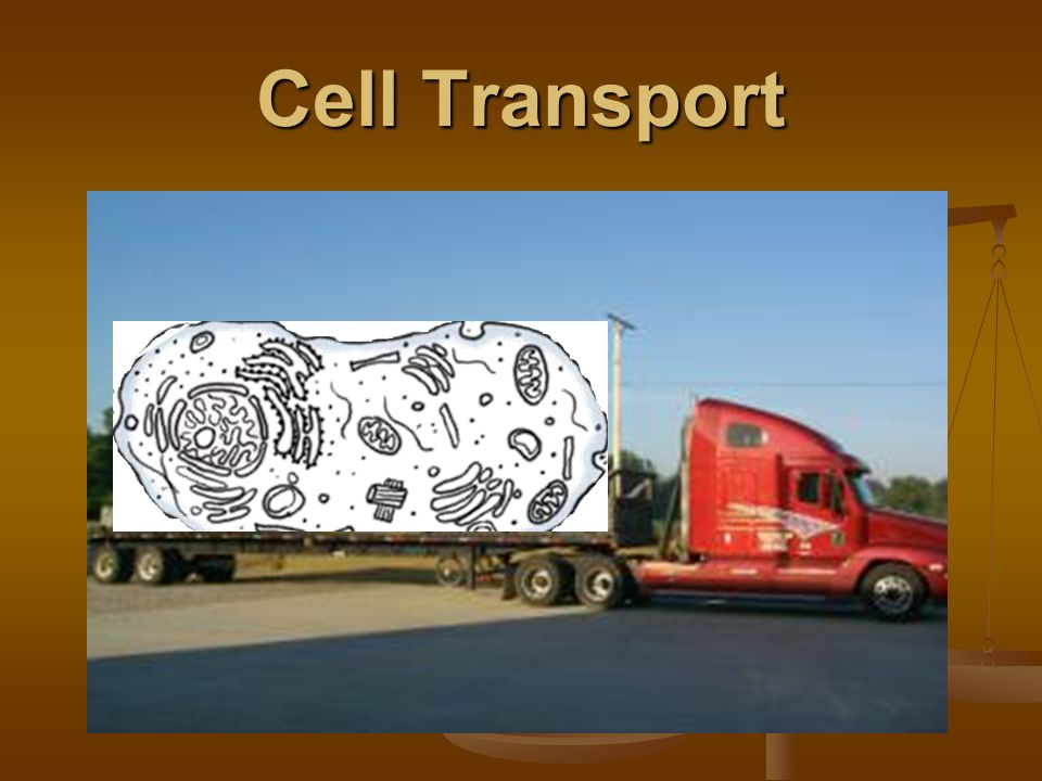 Cell Transport. Ch. 9: Cell Transport Passive Transport Passive ...