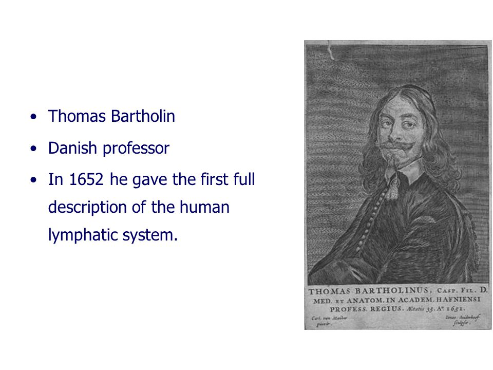 Thomas Bartholin Danish professor In 1652 he gave the first full description of the human lymphatic system.