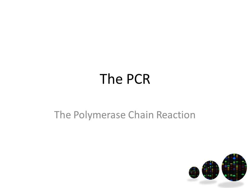 The PCR The Polymerase Chain Reaction