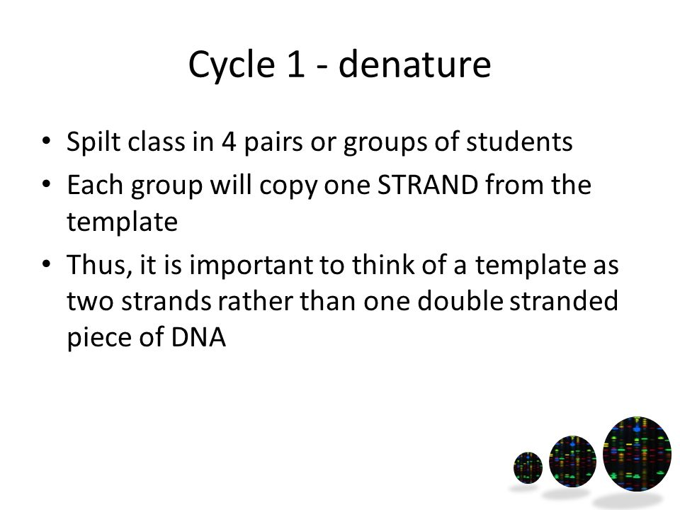 Cycle 1 - denature Spilt class in 4 pairs or groups of students Each group will copy one STRAND from the template Thus, it is important to think of a template as two strands rather than one double stranded piece of DNA