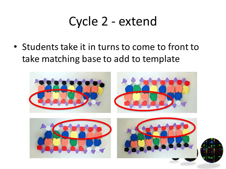 Cycle 2 - extend Students take it in turns to come to front to take matching base to add to template
