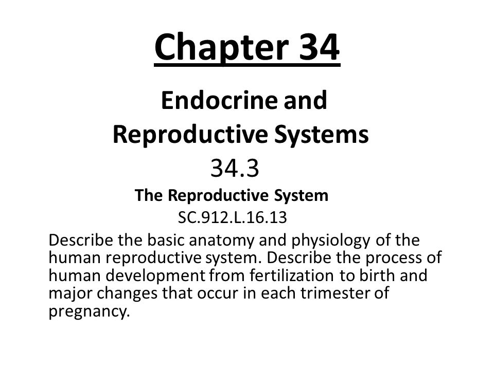 Chapter 34 Endocrine and Reproductive Systems 34.3 The Reproductive System SC.912.L.16.13 Describe the basic anatomy and physiology of the human repro
