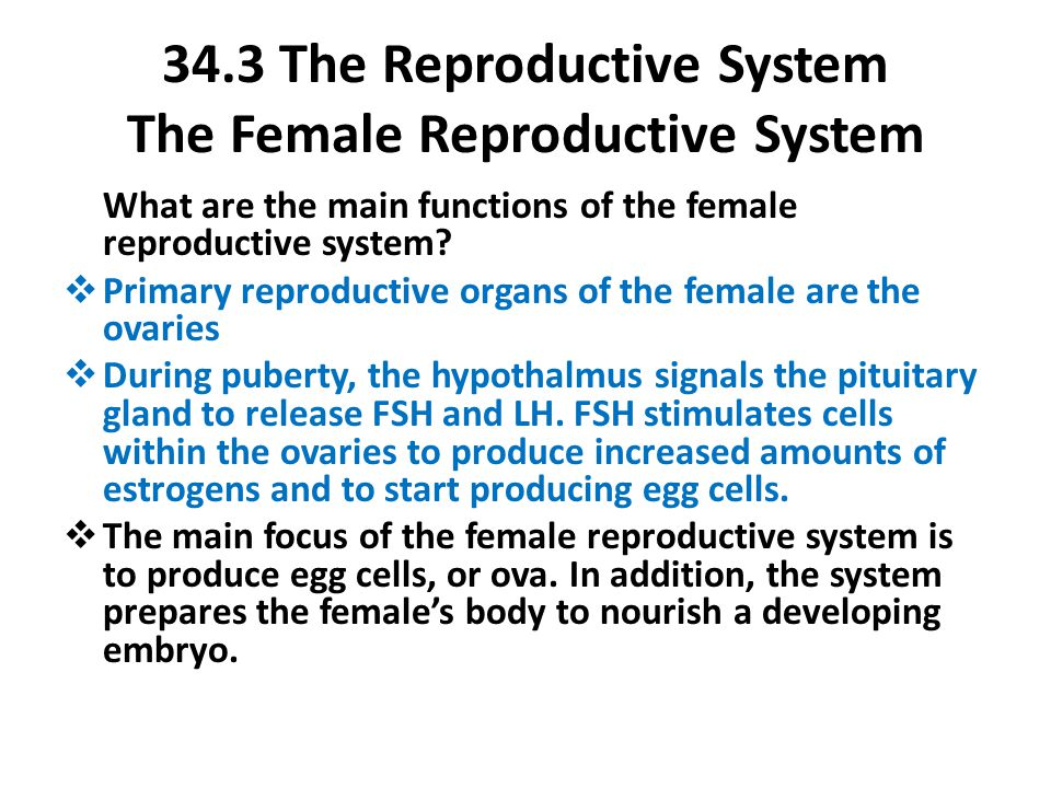 34.3 The Reproductive System The Female Reproductive System What are the main functions of the female reproductive system?  Primary reproductive orga