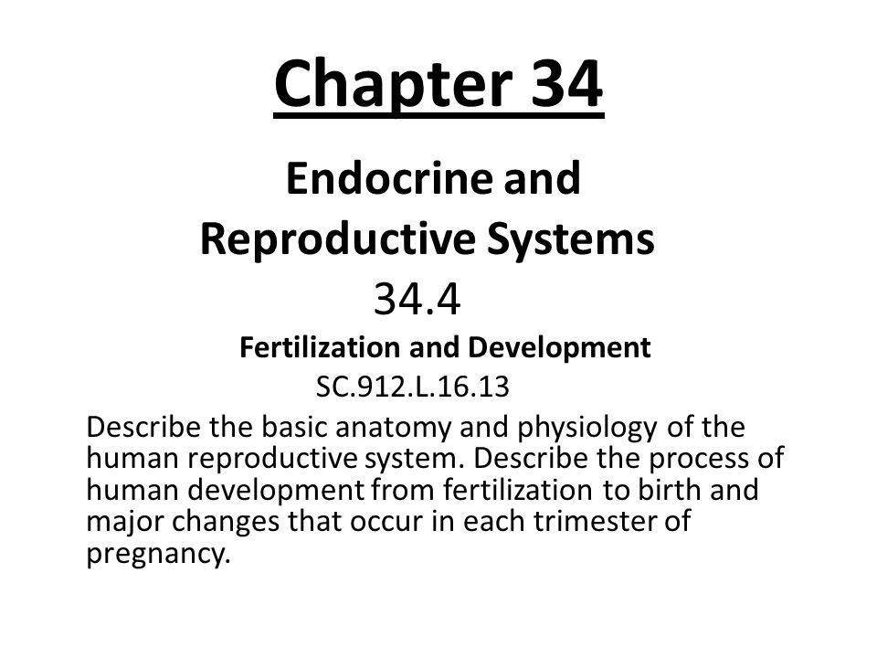 Chapter 34 Endocrine and Reproductive Systems 34.4 Fertilization and Development SC.912.L.16.13 Describe the basic anatomy and physiology of the human