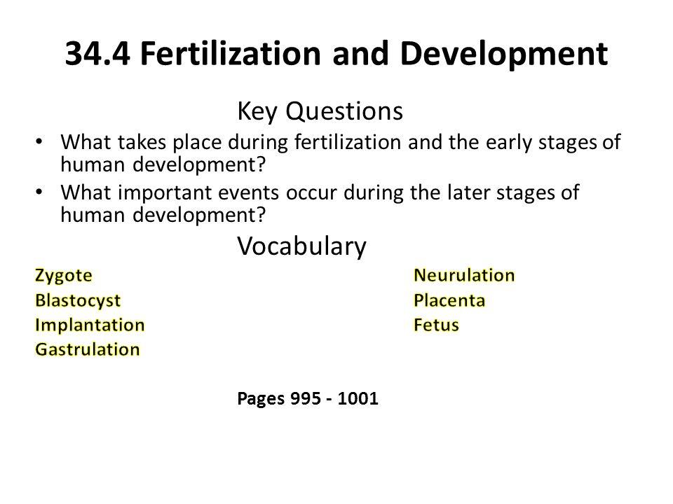 34.4 Fertilization and Development