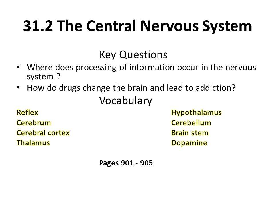 31.2 The Central Nervous System