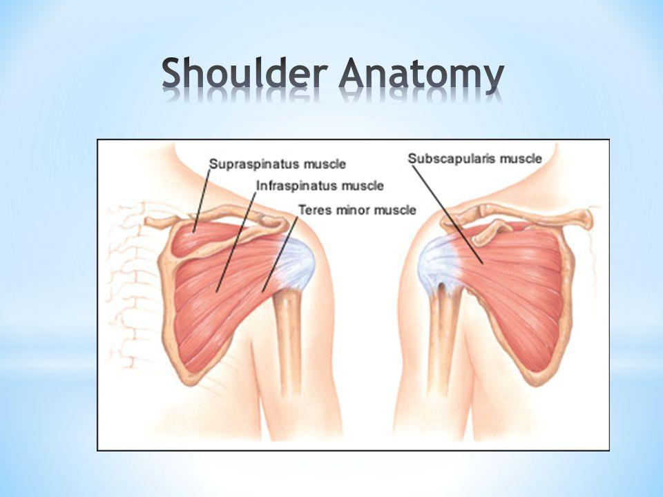 Shoulder Anatomy and Arthroscopy Mohsen Mardani-Kivi M.D. GUMS ...