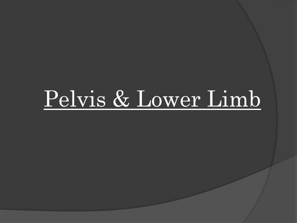 Pelvis & Lower Limb