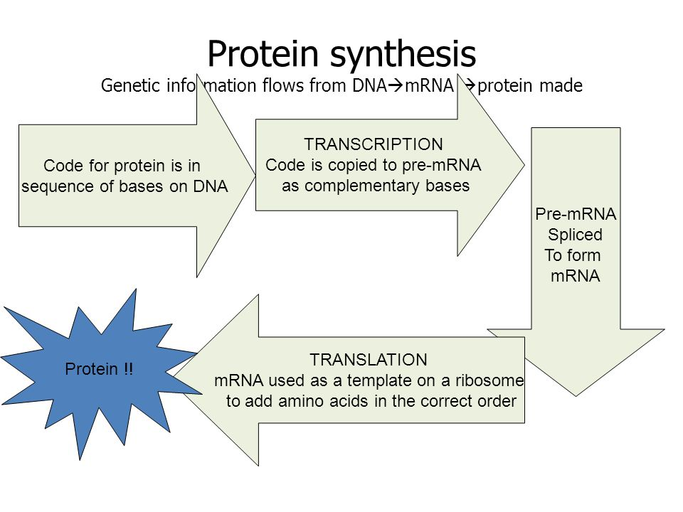 Syllabus transcription as the production of mrna from dna the 4 protein ccuart Gallery