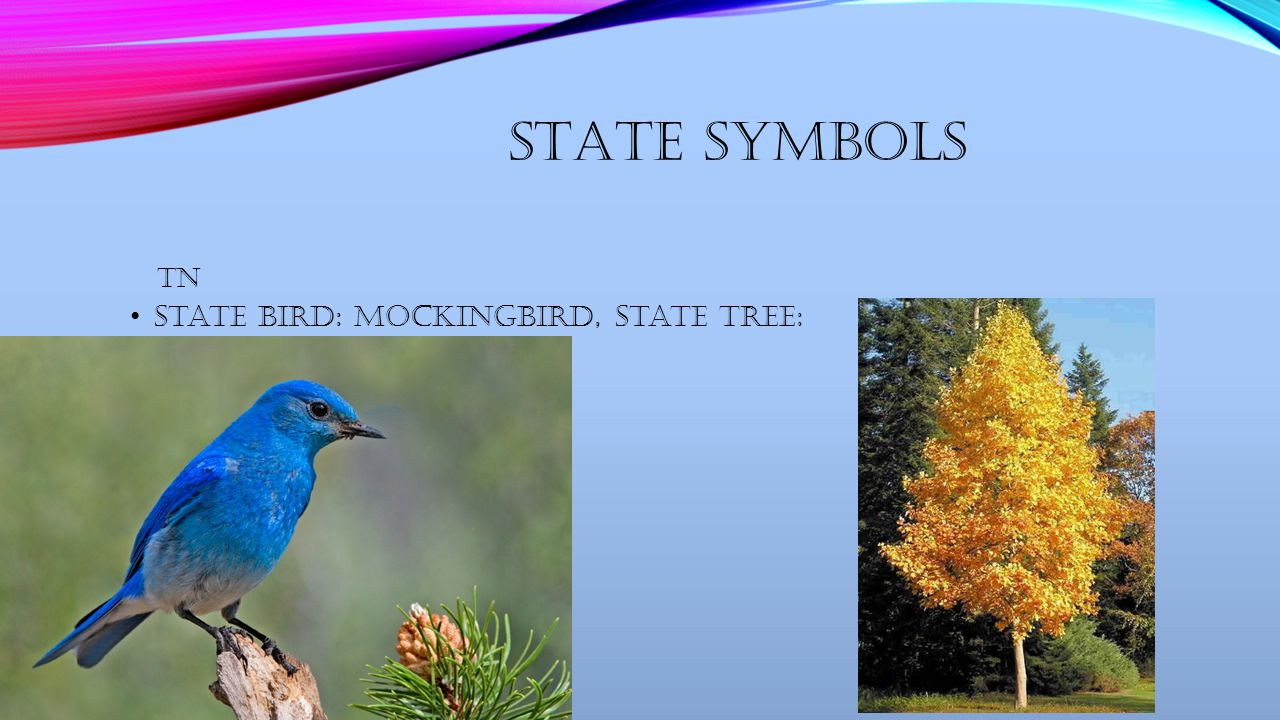 Tennessee by mariah nicole del gaizo maps tennessee ppt download 6 state symbols state bird mockingbird state tree tn buycottarizona Images
