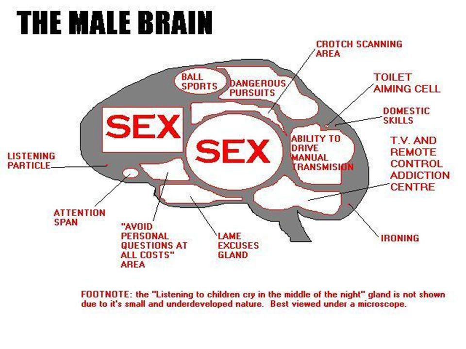 UNIT II: THE HUMAN BRAIN. Goal Understand that different parts of ...