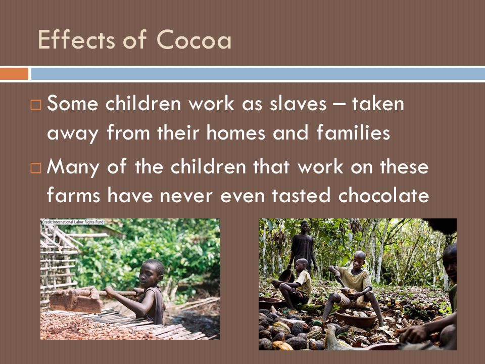 Effects of Cocoa  Some children work as slaves – taken away from their homes and families  Many of the children that work on these farms have never even tasted chocolate