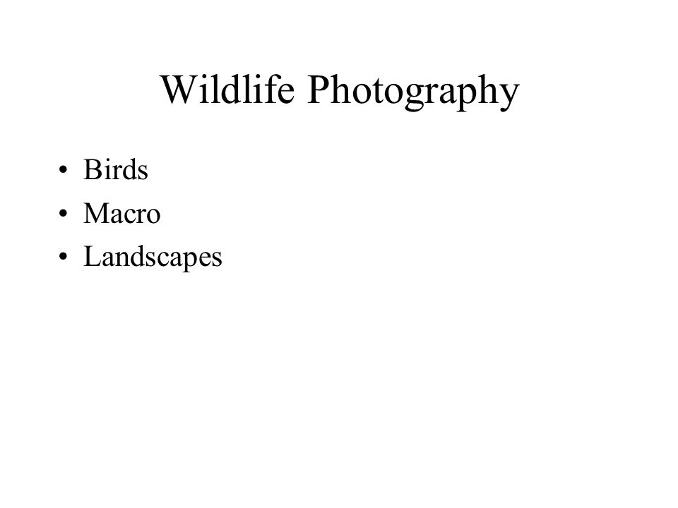 Wildlife Photography Birds Macro Landscapes