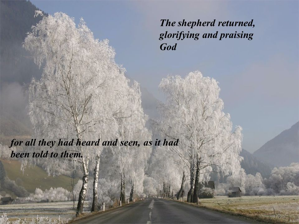 And all whom heard it were amazed at what the shepherds told them.