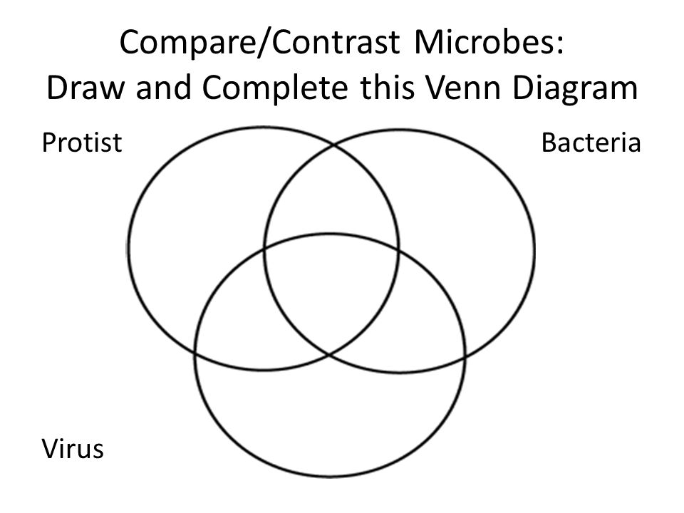 7c45 world of microbes kingdoms scientists classify living 15 comparecontrast microbes draw and complete this venn diagram protistb bacteria virus ccuart Choice Image