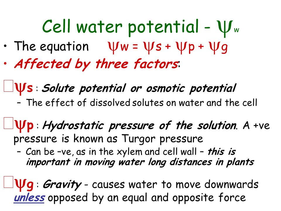 Equation For Water Potential - Jennarocca