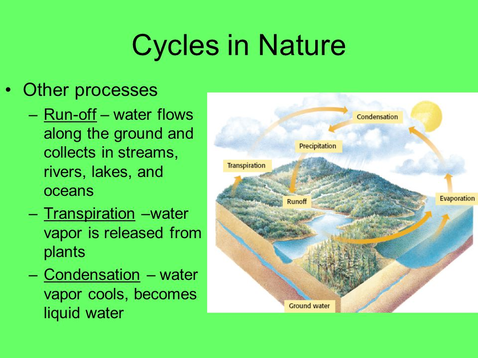 Cycles in Nature Water cycle –Precipitation – liquid water falls to earth in four forms rain, sleet, snow, hail –Evaporation – liquid water becomes water vapor –Ground water – liquid water seeps into the earth and is stored under the ground