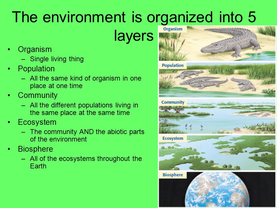 EVERYTHING IS CONNECTED Ecology is the study of the interactions between living things and their environment –Living things are known as biotic –Non living things are abiotic