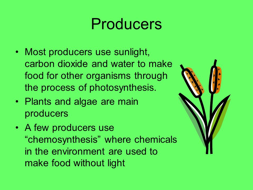 LIVING THINGS NEED ENERGY The sun is the ultimate source of energy in almost all ecosystems Energy is passed from organism to organism A balanced ecosystem has organisms in all of the following roles –Producers –Consumers –Decompsers