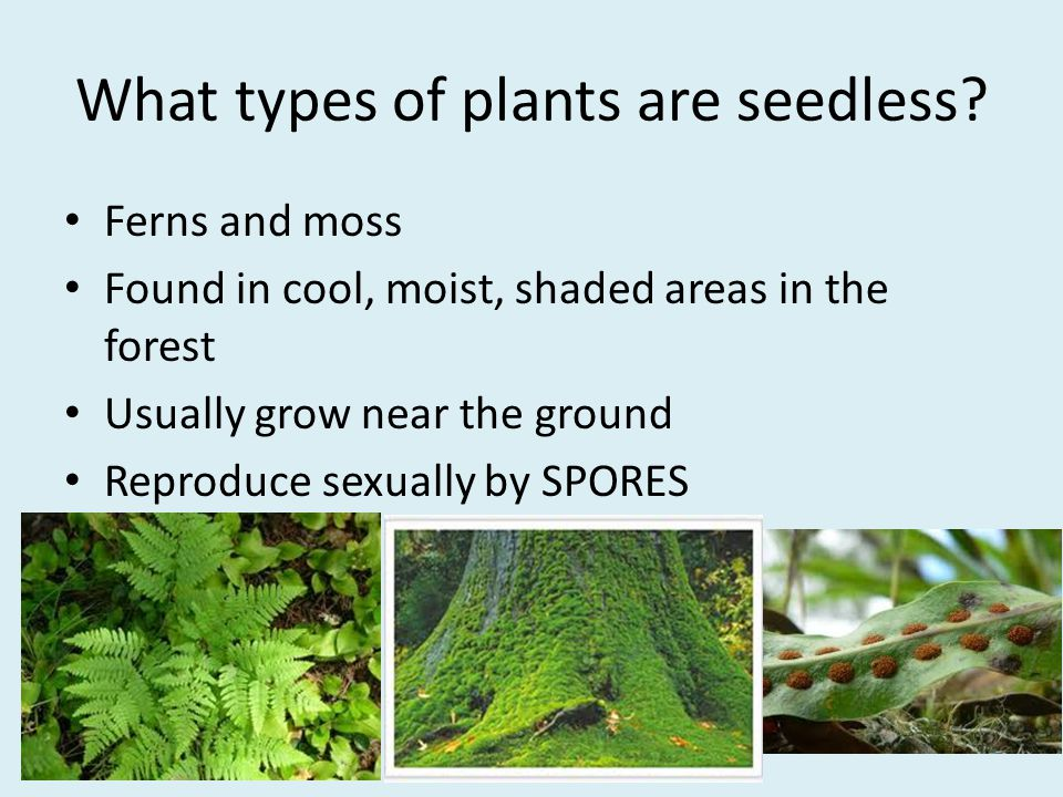 What types of plants are seedless.