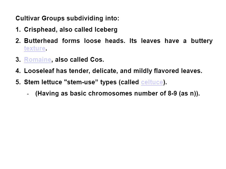 Cultivar Groups subdividing into: 1.Crisphead, also called Iceberg 2.Butterhead forms loose heads.