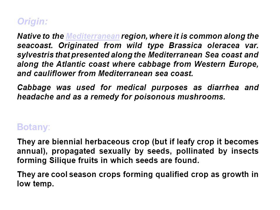 Origin: Native to the Mediterranean region, where it is common along the seacoast.