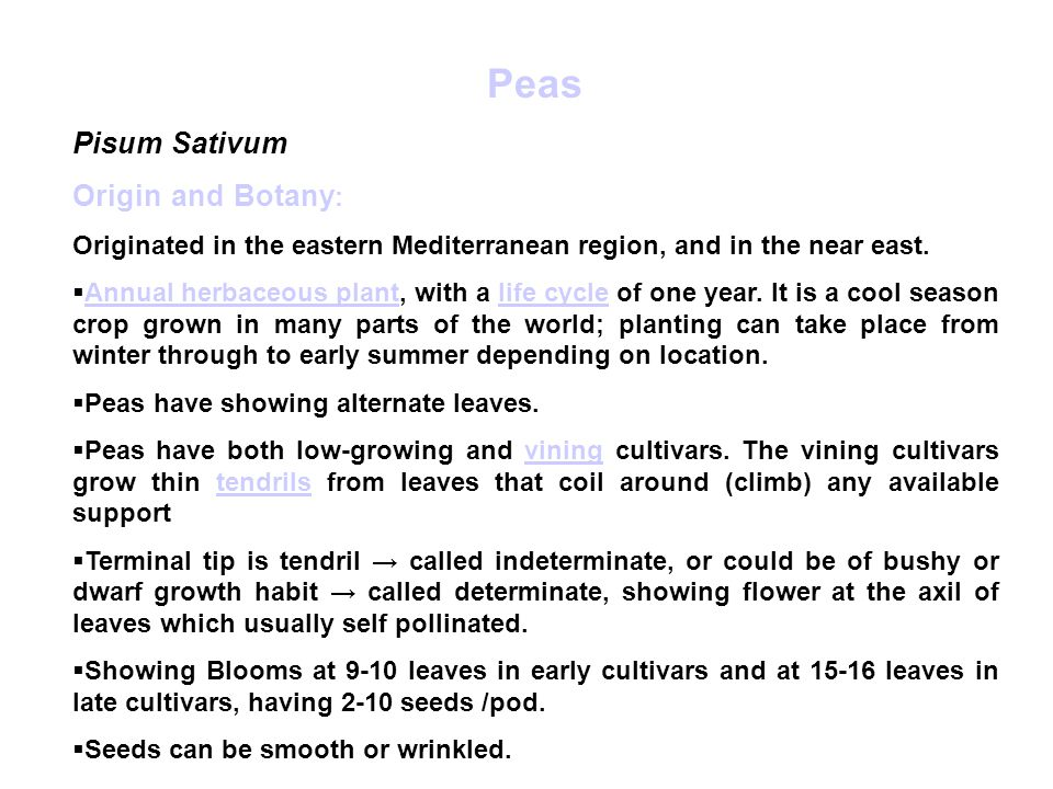 Peas Pisum Sativum Origin and Botany : Originated in the eastern Mediterranean region, and in the near east.
