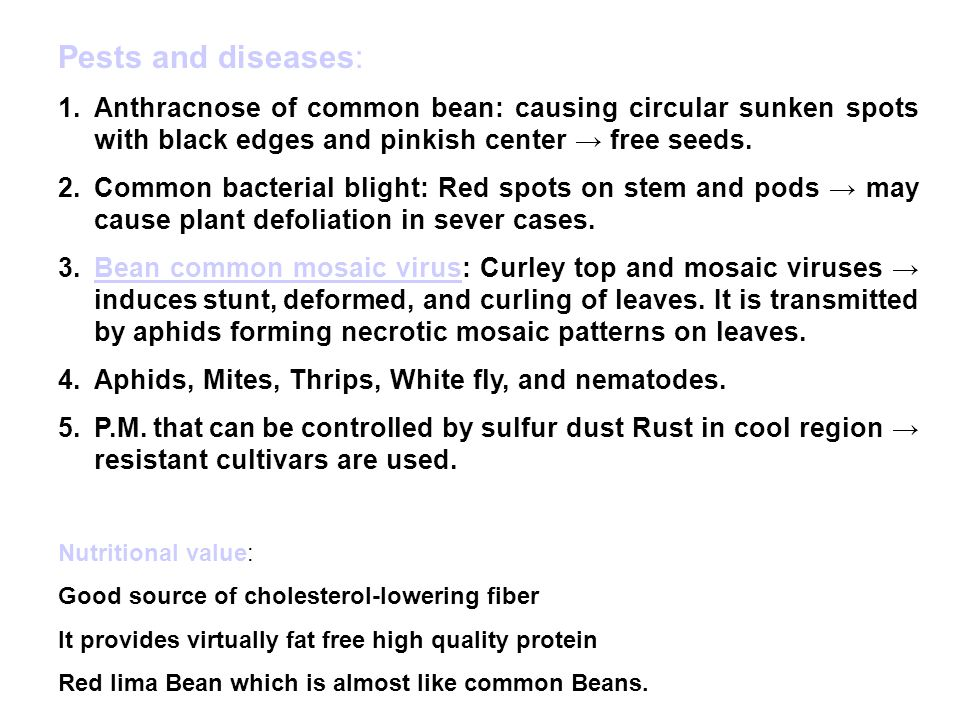 Pests and diseases: 1.Anthracnose of common bean: causing circular sunken spots with black edges and pinkish center → free seeds.