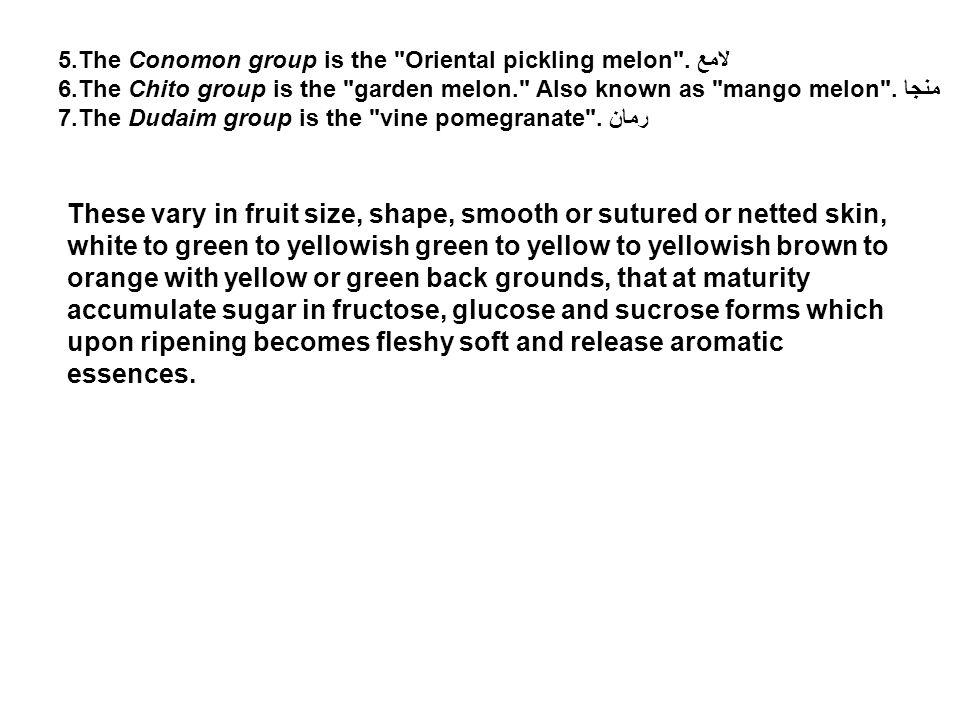 5.The Conomon group is the Oriental pickling melon .