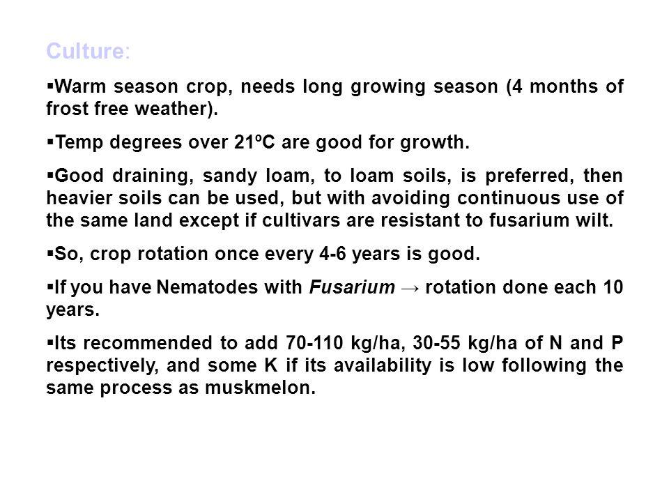 Culture:  Warm season crop, needs long growing season (4 months of frost free weather).