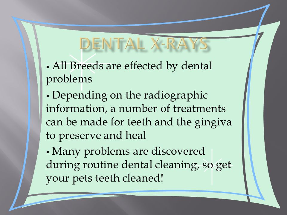 All Breeds are effected by dental problems  Depending on the radiographic information, a number of treatments can be made for teeth and the gingiva to preserve and heal  Many problems are discovered during routine dental cleaning, so get your pets teeth cleaned!
