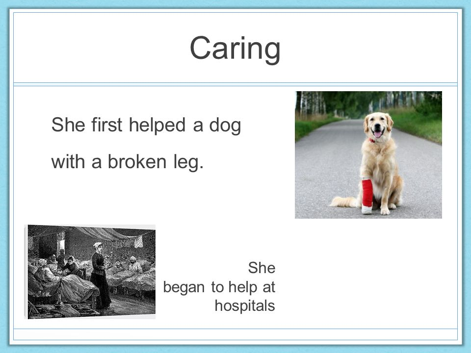 Caring She first helped a dog with a broken leg. She began to help at hospitals