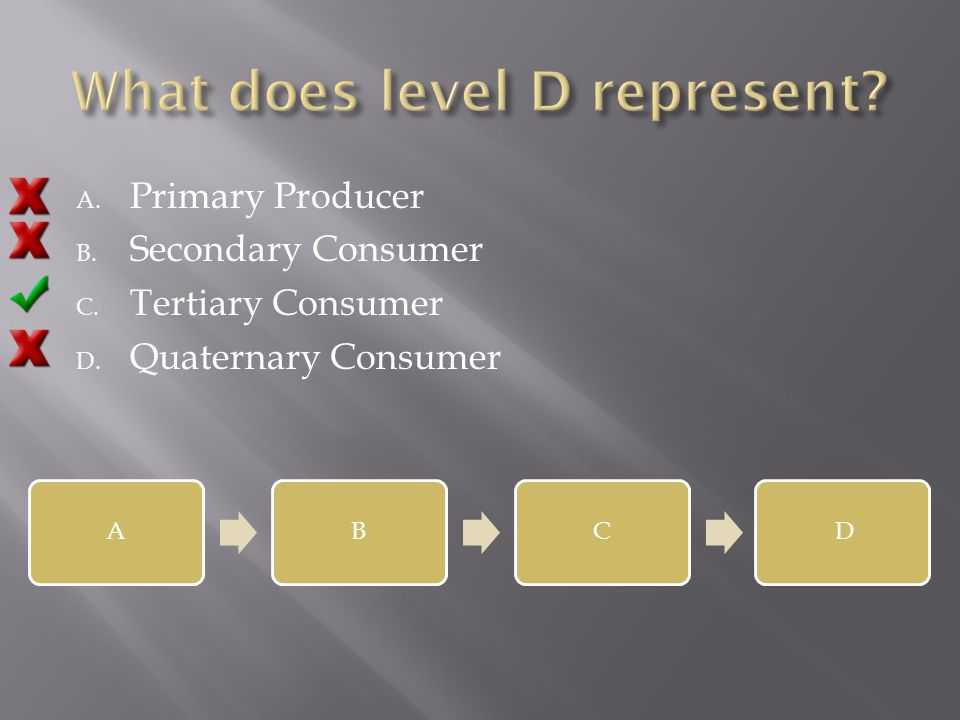 A. Primary Producer B. Secondary Consumer C. Tertiary Consumer D. Quaternary Consumer ABCD
