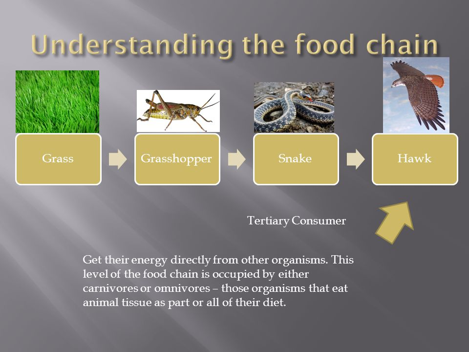 Tertiary Consumer Get their energy directly from other organisms.