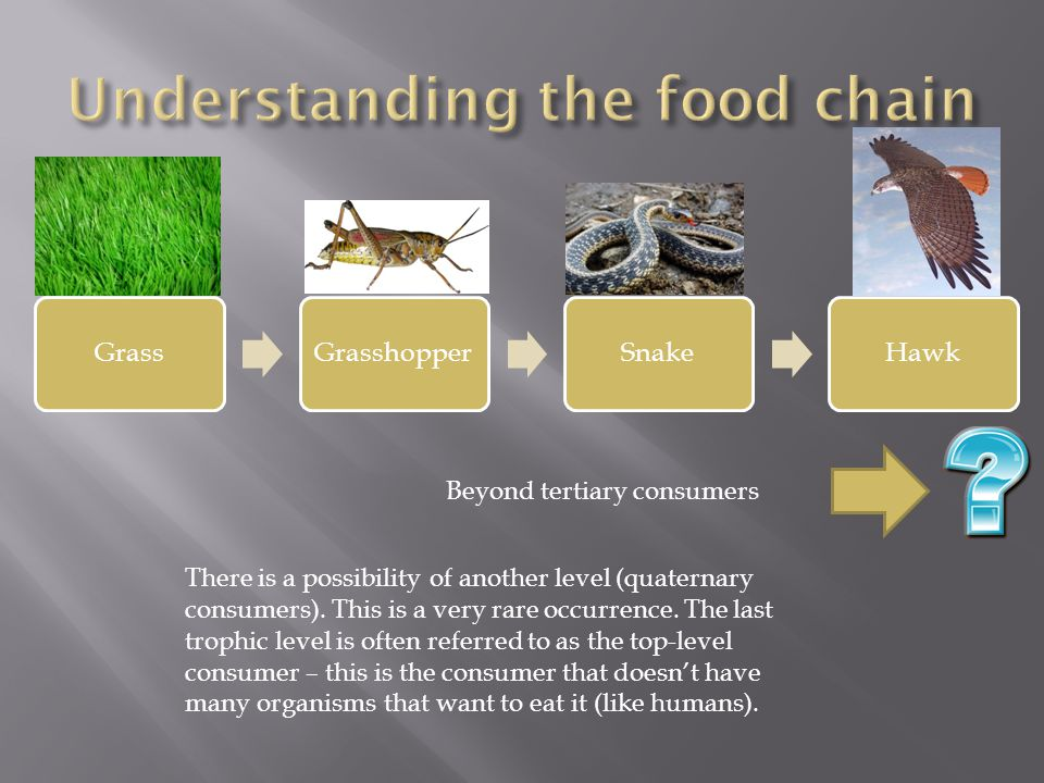 Beyond tertiary consumers There is a possibility of another level (quaternary consumers).
