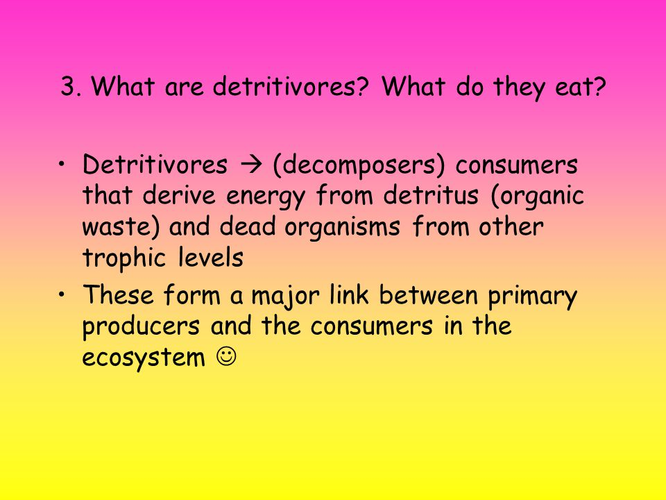 3. What are detritivores. What do they eat.