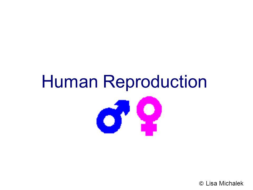 Human Reproduction © Lisa Michalek